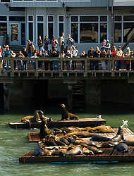 San Francisco: Sea lions and tourists at Pier 39. Photo 14-casanf78195. Photo copyright Lee Foster.