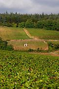 vineyard hut mercurey burgundy france