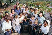 A series of images about port wine production in Portugal c 1960 - group portrait of people harvesting grapes