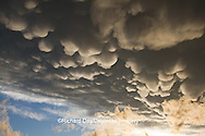 63891-02407 Mammatus clouds after storm,  Marion Co. IL