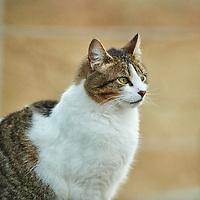 20210311-cat