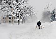 Feb 10,2010 - Herndon, Va USA - A man walks his dogs through the blizzard conditions in historic Herndon, Virginia on Wednesday.(Credit Image: ©Pete Marovich/ZUMA Press)