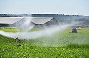 Nederland, Groesbeek, 4-7-2019 Een boer beregent zijn akker nat dmv een waterkanon. Foto: Flip Franssen