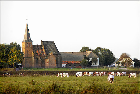 Nederland, Persingen, 23-09-2011Koeien in een weiland tegen de achtergrond van het kerkje van Persingen. Persingen is een dorp in de gemeente Ubbergen, provincie Gelderland. Het ligt in de Ooijpolder. Met 34 woningen wordt het beschouwd als het kleinste dorp van Nederland. Het dorpje heeft een laat-middeleeuws gotisch kerkje, dat dienst doet als tentoonstellingsruimte en trouwlocatie. In het verleden is het dorp groter geweest, maar in 1809 werd het vrijwel geheel door overstroming van de Waal verzwolgen. Het resterende Persingen ligt op een donk, een rivierduin.Foto: Flip Franssen/Hollandse Hoogte