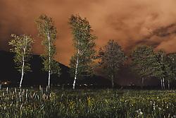 THEMENBILD - angeleuchtete Bäume auf einem Feld in der Nacht fotografiert, aufgenommen am 16. Mai 2020 in Kaprun, Österreich // trees illuminated with a flashlight in the night, Kaprun, Austria on 2020/05/16. EXPA Pictures © 2020, PhotoCredit: EXPA/ JFK