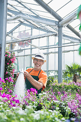 Male gardener watering plants in greenhouse, Augsburg, Bavaria, Germany
