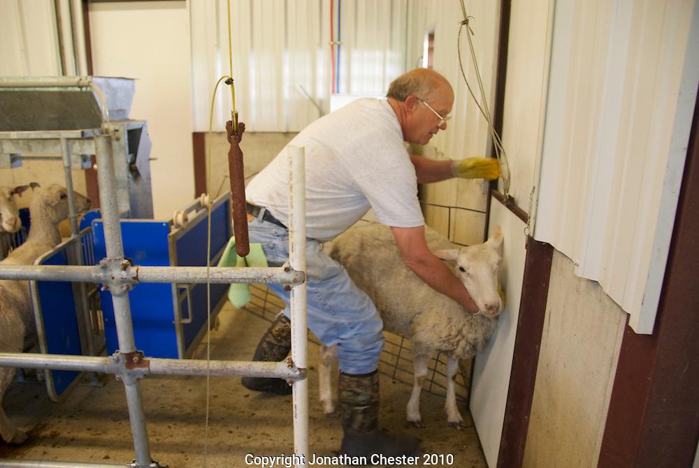Organic Sheep's milk Cheese Dairy.