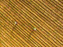 Liaocheng City, China - Farmers work in the fields in Jiazhai Township of Liaocheng City, east China's Shandong Province. Chinese solar term ''beginning of autumn'' falls on Aug. 7 this year. (Credit Image: © Zhao Yuguo/Xinhua via ZUMA Wire)