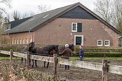 Van der Aa Willy, twee jarige hengsten van For Ferrero en Kingstone<br /> Stal Willy Van der Aa - Vinkel 2021<br /> © Hippo Foto - Dirk Caremans<br /> 17/03/2021