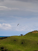 View from near Slope Point, New Zealand, southern most point in New Zealand