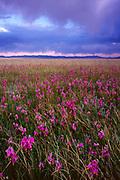 Shooting Stars andClearing Storm, Ruby LakeNational Wildlife Refuge, Nevada