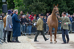 Murphy Joseph, (IRL), Electric Cruise<br /> First Horse Inspection - Mitsubishi Motors Badminton Horse Trials <br /> Badminton 2015