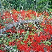 The Wonderland hiking trail in autumn. Acadia National Park. Mount Desert Island. Maine