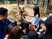 17 AUGUST 2018 - BANGKOK, THAILAND:   Zoo goers gather around a giraffe at Dusit Zoo in Bangkok. The zoo opened in 1938. The zoo grounds were originally the Dusit Royal Garden. The zoo is scheduled to close by the end of August 2018 because it is being relocated to Nakhon Pathom province, south of Bangkok.     PHOTO BY JACK KURTZ