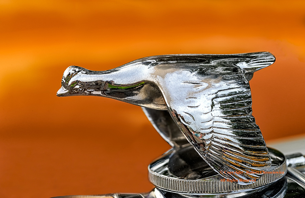 Flying Goose: An antique Ford hood ornament of a goose, flies in front of an orange background at the Cruise and Shine auto show, Aldergrove British Columbia Canada.