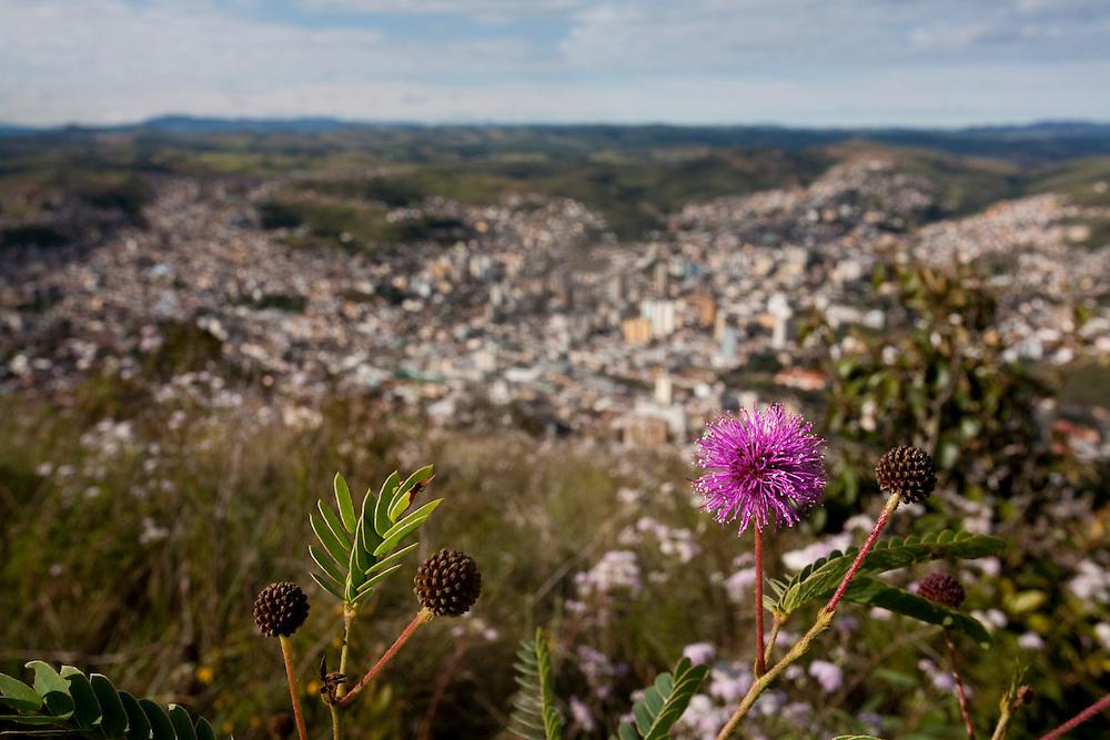 Pocos de Caldas_MG, Brasil...Flores e vista panoramica de Pocos de Caldas ao fundo...Flowers and the panoramic view of Pocos de Caldas in the background...Foto:LEO DRUMOND / NITRO