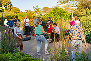 A small group of people dance and play live music in a Brighton Pavillion park