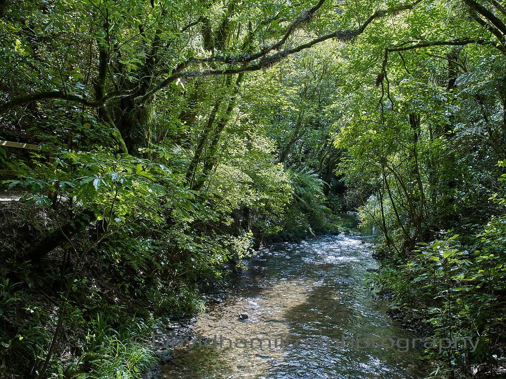 Stream in native bush, New Zealand