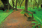Moss-covered bench along trail through the Quinault Rain Forest, Olympic National Park, Washington USA