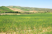 Farming landscape of Rio Setenil valley, Cuevas del Marques, Serrania de Ronda, Spain