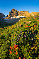 The sunshine covers the basin and the wildflowers sway gently in the wind below Mt. Timpanogos.