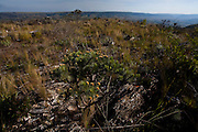 Sao Roque de Minas_MG, Brasil...Parque Nacional Serra da Canastra em Sao Roque de Minas, Minas Gerais...The Serra da Canastra National Park in Sao Roque de Minas, Minas Gerais...Foto: LEO DRUMOND / NITRO