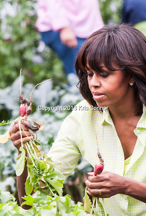 First Lady Michelle Obama joins students from Sarah Moore Greene Magnet Technology Academy School, Knox County, TN and with other school children from across the countrya harvest the White House Kitchen Garden for the fifth year in a row at the White House on May 28, 2013 in Washington DC. Photo by Kris Connor