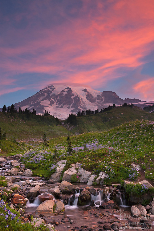 Bright red clouds, illuminated by the sunrise, point to the summit of Mount Rainier in Washington state. Below, summer wildflowers, including Silky Lupine and Indian Paintbrush, line Edith Creek. The creek is located in the Paradise section of Mount Rainier National Park, known for stunning displays of summer wildflowers. Mount Rainier, with an elevation of 14,411 feet (4,392 meters), is the tallest mountain in Washington and the highest mountain in the Cascade Range.