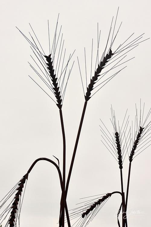 Metallic wheat sculpture, Weyburn, Saskatchewan, Canada