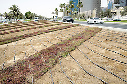 Water irrigation system on flower bed in Doha Qatar