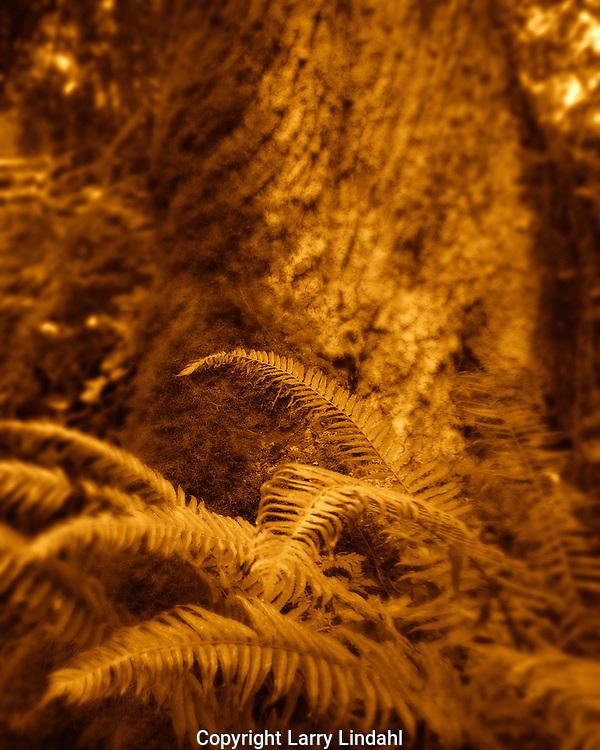 Sword fern near tree Columbia River Gorge Oregon