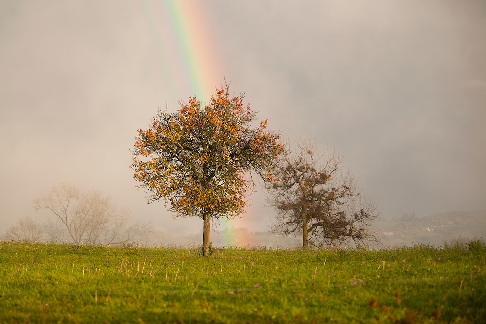 Rainbow and tree with upcoming mist from the valley highlighted by the sun.