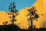 Ponderosa pine (Pinus ponderosa) trees and canyon wall at sunrise. Thompson Valley, Kamloops, British Columbia, Canada