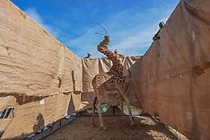 A Daring Giraffe Recue