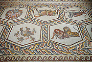 African animals and fish from the 3rd century Roman mosaic villa floor from Lod, near Tel Aviv, Israel. The Roman floor mosaic of Lod is the largest and best preserved mosaic floor from the levant region along the eastern Mediterranean coast. It is unclear whether the owners were Jewish, Christian or pagan but either way they would have been wealthy to own such a magnificent floor. The Shelby White and Leon Levy Lod Mosaic Centre, Lod, Israel. .<br /> <br /> If you prefer to buy from our ALAMY STOCK LIBRARY page at https://www.alamy.com/portfolio/paul-williams-funkystock/roman-mosaic.html. Type -    lod  - into LOWER SEARCH WITHIN GALLERY box - Refine search by adding a subject, place, background colour, museum etc.<br /> <br /> Visit our ROMAN WORLD PHOTO COLLECTIONS for more photos to download or buy as wall art prints https://funkystock.photoshelter.com/gallery-collection/The-Romans-Art-Artefacts-Antiquities-Historic-Sites-Pictures-Images/C0000r2uLJJo9_s0