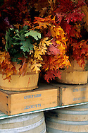 Fall foliage decoration display, Avila Barn, near Avila Beach, San Luis Obispo County, California