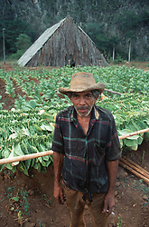 Tobacco farmer standing in front of his field and thatched tobaccodrying barn near to Vinales; Pinar Province; Cuba; holding cigarette,