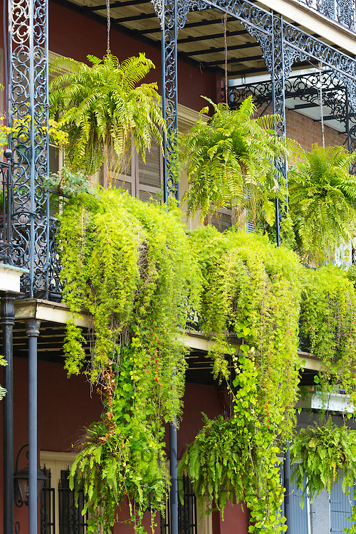 Overgrown hanging plants on wrought iron fretwork gallery balcony in St Philip Street, French Quarter of New Orleans, USA