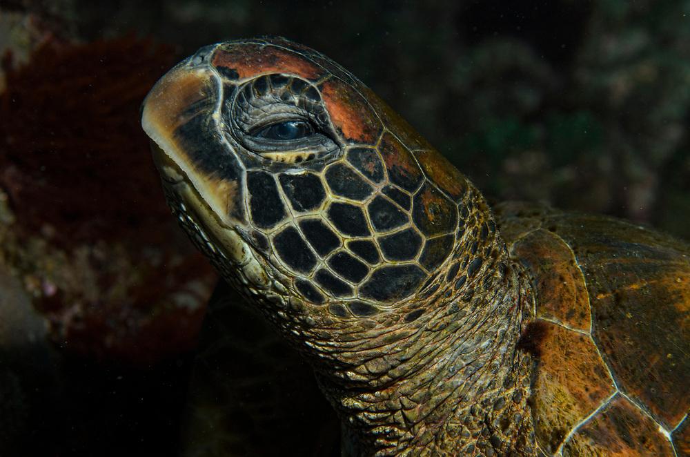 Kermadec, Kermadec Islands, Rangitāhua, New Zealand, remote, diving, rare, nz, turtle