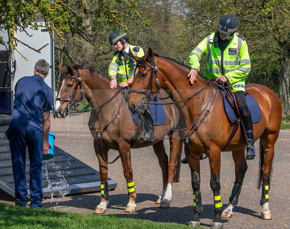 © Licensed to London News Pictures. 10/04/2020. London, UK. Police horses get a drink after patrolling for over two hours in Richmond Park. There has been a high police presence in London over the last week to persuade people from unnecessarily going out over the Easter Bank holiday weekend were temperatures are expected to reach 25c as the coronavirus crisis continues.. Photo credit: Alex Lentati/LNP
