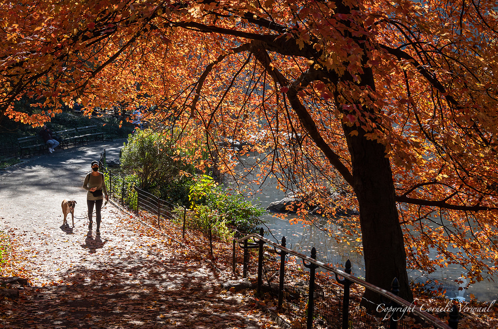 A masked lady and her dog passing under a maple tree at The Pond in Central Park