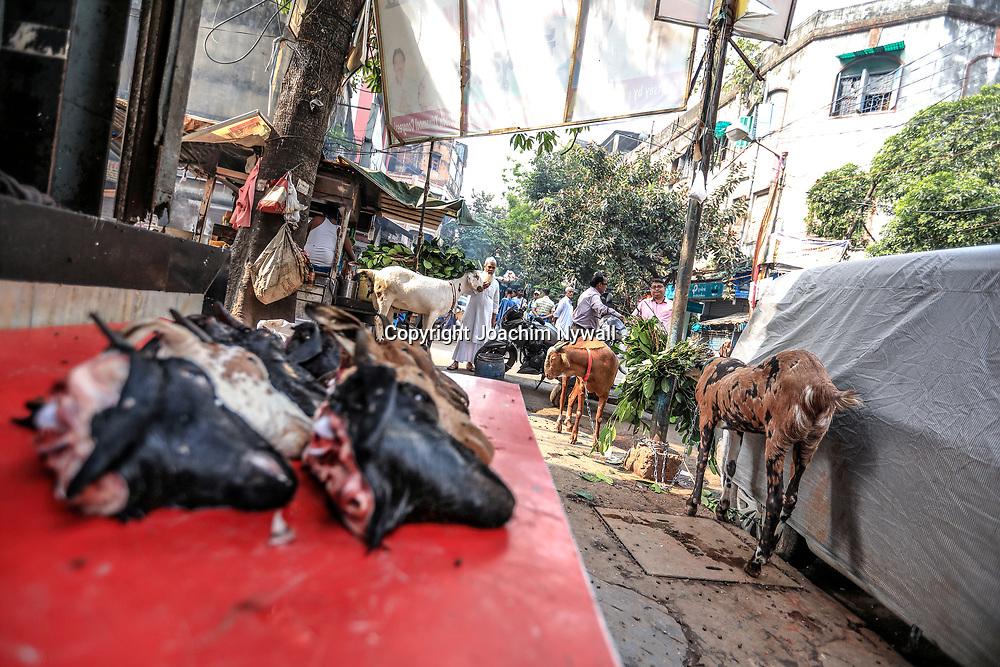 20171029 Kolkata Calcutta Indien<br /> Slaktare i Chadni Chowk<br /> Getter som väntar på slakt<br /> <br /> ----<br /> FOTO : JOACHIM NYWALL KOD 0708840825_1<br /> COPYRIGHT JOACHIM NYWALL<br /> <br /> ***BETALBILD***<br /> Redovisas till <br /> NYWALL MEDIA AB<br /> Strandgatan 30<br /> 461 31 Trollhättan<br /> Prislista enl BLF , om inget annat avtalas.