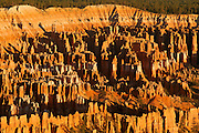 Hundreds of hoodoos that make up the Bryce Canyon amphitheater are lit at sunrise. Bryce Canyon is national park in Utah. The hoodoos, or spires, are remanants of large sandstone fins that have been subjected to centuries of erosion.