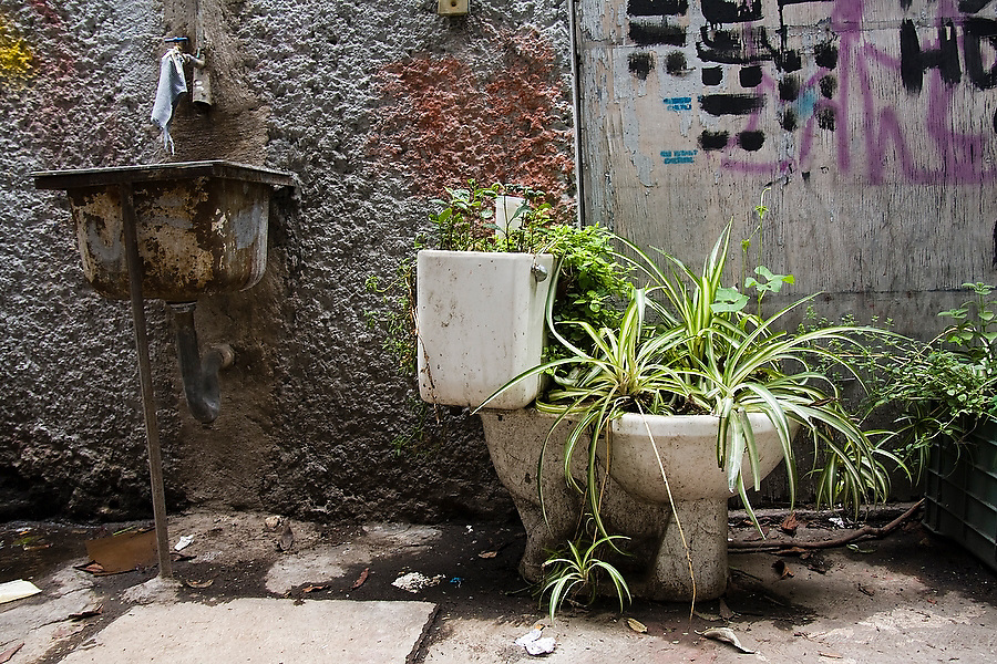 Plants grow from a toilet seat used as a planter outside the offices of the organization Azoteas Verdes (Green Roofs) in the Centro Cultural La Pyramide in Mexico City, Mexico on June 17, 2008. The organization promotes roof garden construction throughout the city, teaching workshops, collecting used containers and preparing compost from organic waste.