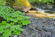 Nickel Creek on the Wonderland Trail, Mount Rainier National Park, Washington