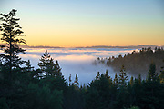 Cool summer fog from the nearby Pacific Ocean pours into the forested Russian River Valley, seen from Willow Creek in Sonoma Coast State Park, Occidental, California