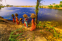 Woman carrying wood on the heads, Rohet, Rajasthan, India