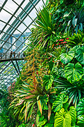 Lush vegitation and walkway in the Cloud Forest Dome, Gardens by the Bay, Singapore, Republic of Singapore