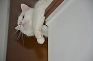 Ezio Cat
