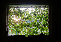 20 August 2015. New Orleans, Louisiana. <br /> Hurricane Katrina revisited. <br /> A decade later and recovery remains largely elusive for the area hardest hit by Katrina. The view from a window of an abandoned house flooded by the storm.<br /> Photo credit©; Charlie Varley/varleypix.com.